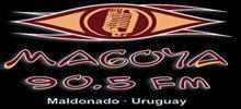 جماهير FM