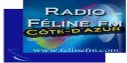 Feline FM