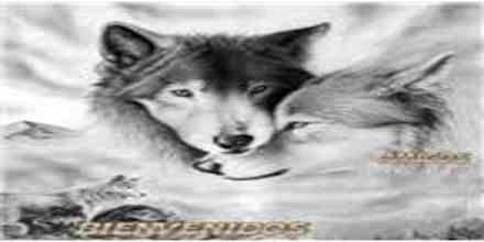 Lobo Amanecer Mx