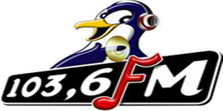 Pinguin FM Bali